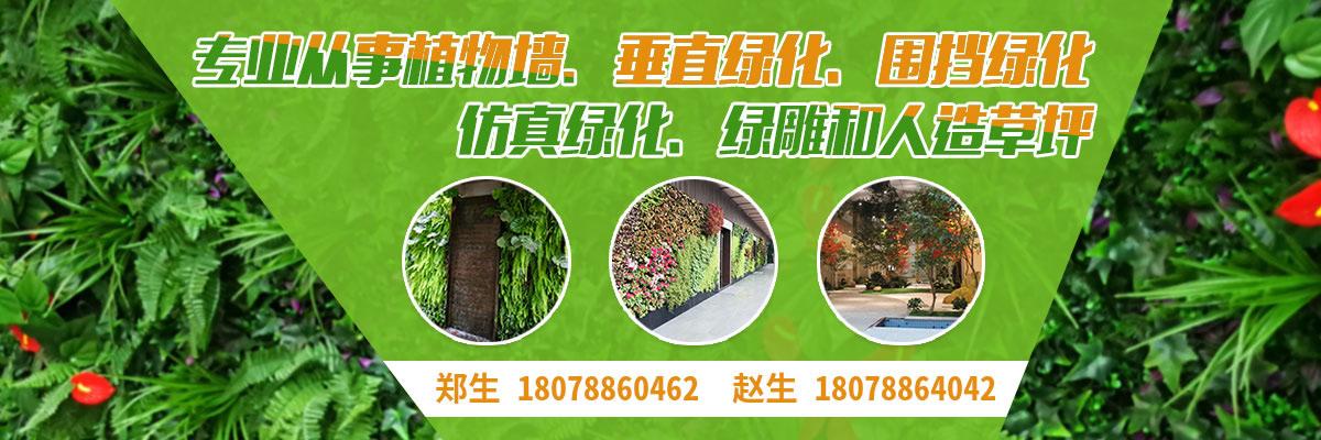 广州美居植物墙