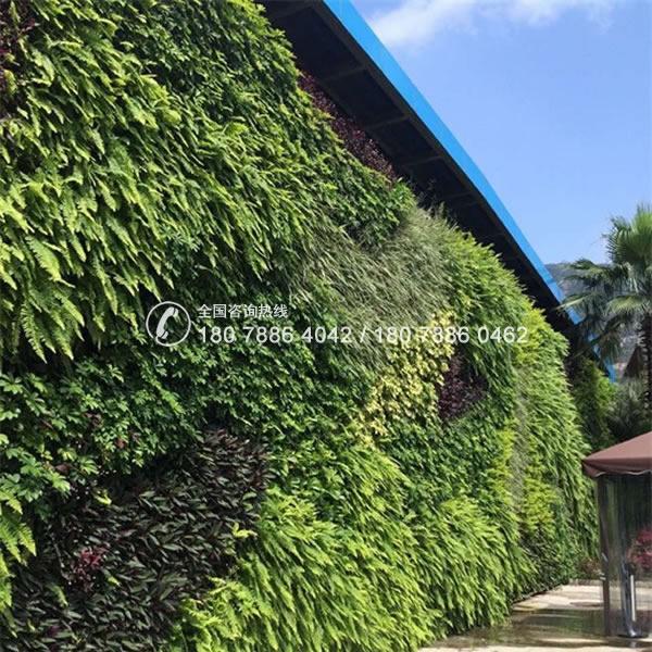 珠海长隆 垂直绿化植物墙