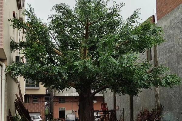 如何制作仿真树流程 难吗?