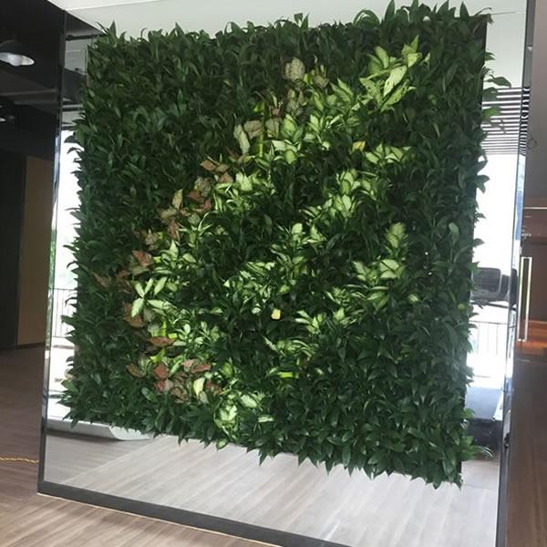 蓝翼健身房 垂直绿化植物墙