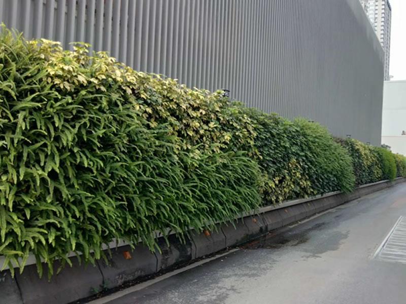 广州奥园地铁站 垂直绿化植物墙