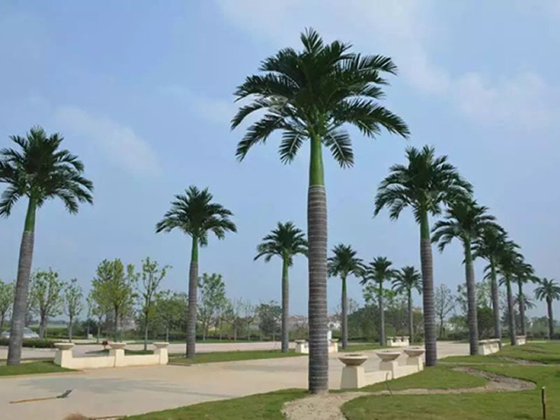 人民公园椰子树 仿真树