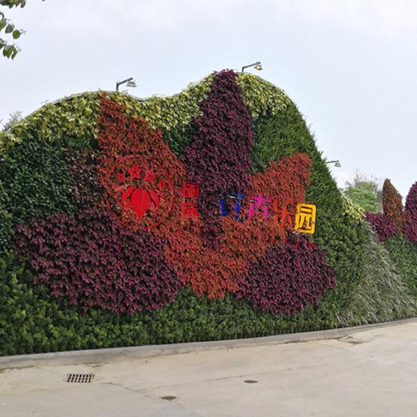 植物墙 垂直绿化