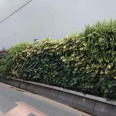 植物围挡厂家