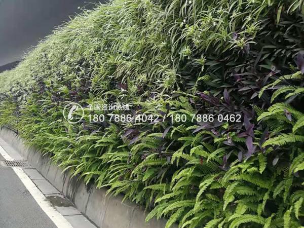 植物围挡公司