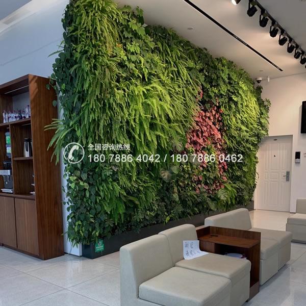 室内植物墙公司