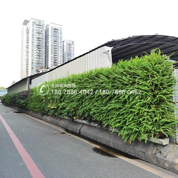 围挡绿化 植物围挡