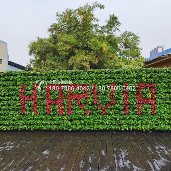 绿色植物墙 垂直绿化工程
