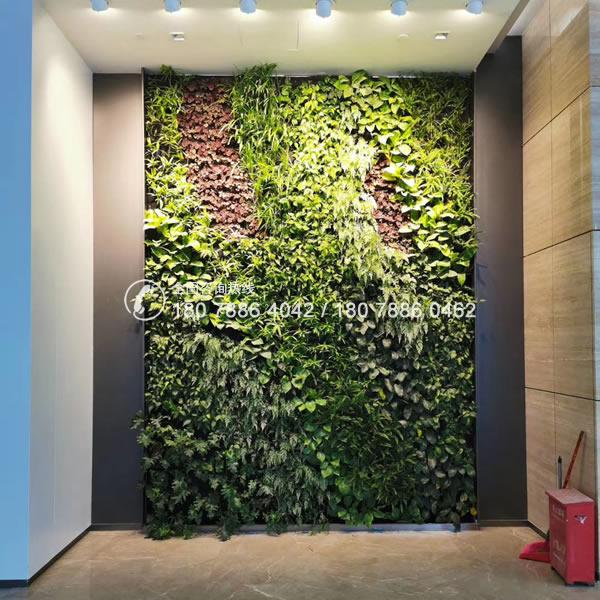 室内绿色植物墙 垂直绿化
