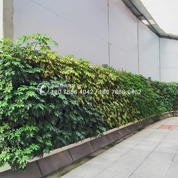 城市围档绿化工程