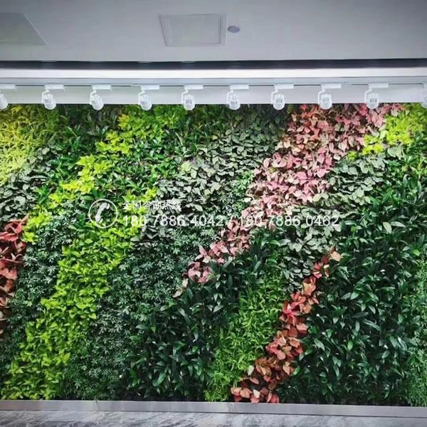 室内大型植物墙