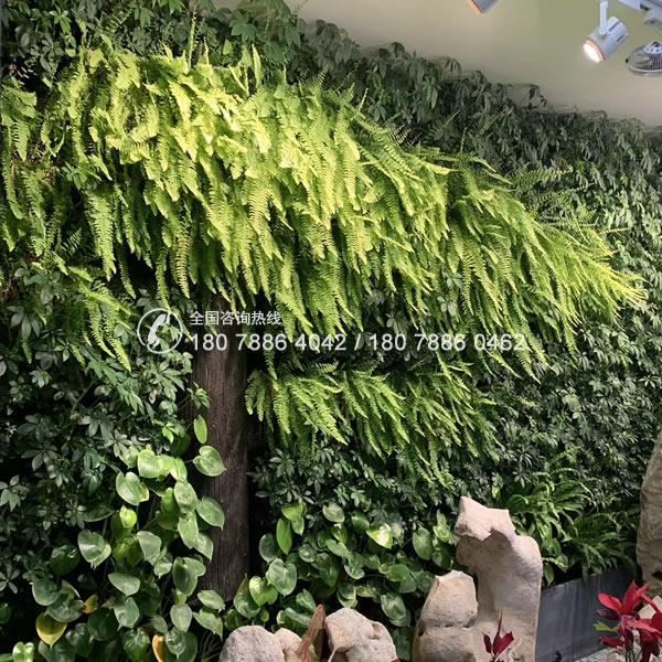 植物墙公司 垂直绿化工程