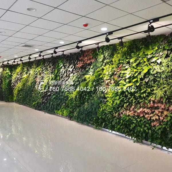 广州植物墙 垂直绿化工程
