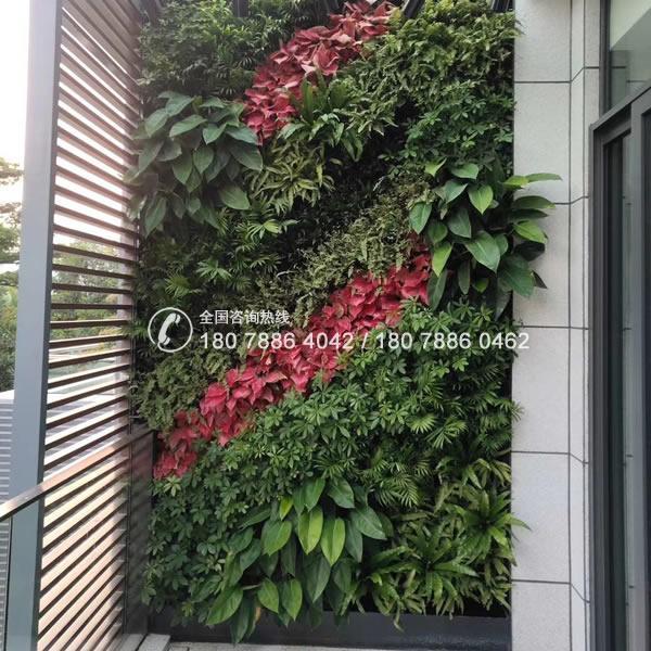 珠海垂直绿化 专业植物墙公司