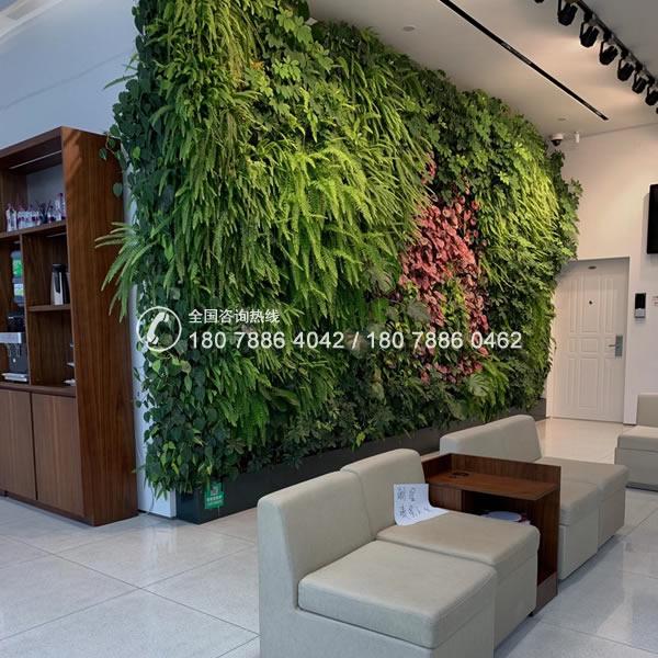 佛山植物墙垂直绿化