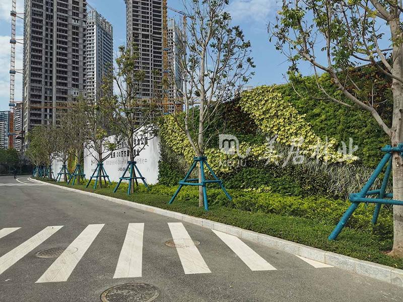 深港国际围挡绿化