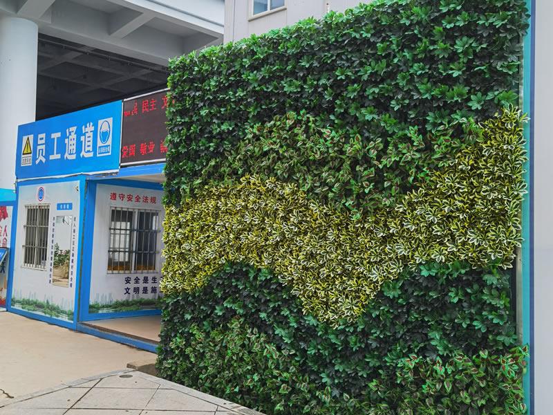珠海植物墙-横琴口岸