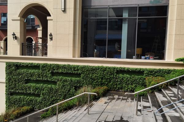 植物墙设计图片大全在哪看?如何设计植物墙?