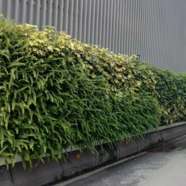 广州专业围挡绿化