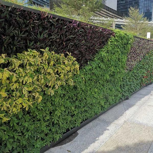 专业植物墙绿植围挡公司